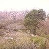 ☆桜情報☆の画像