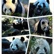 上野動物園(*゚Д゚…