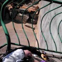 動物園とかみねバーガ…