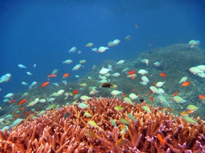 西表島ダイビング あべちゃん海ブログ  「にこにこダイビング」-西表島ダイビング写真