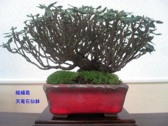 盆栽と共に・・・