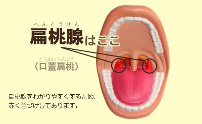 口を開く:扁桃腺