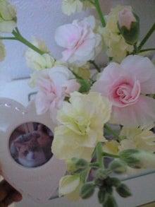 ずれずれブログ…湘南で猫と暮らせば…-CA390844-0001.jpg