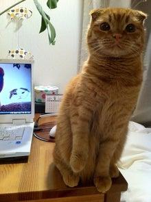 癒し猫☆ぷように☆とのまったり生活