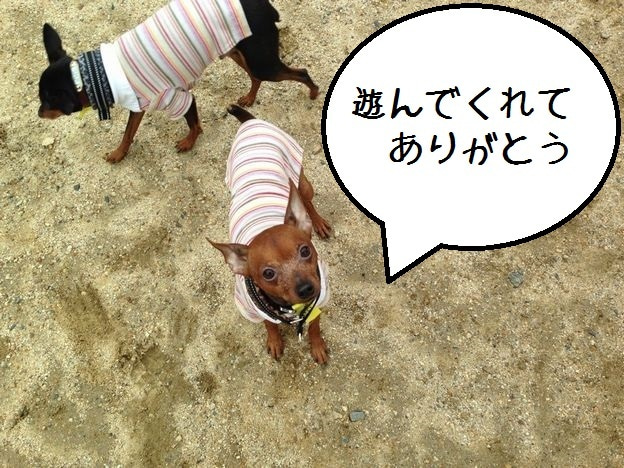ミニピン!!! 大和!!! 武蔵!!!-2013.03.21-10