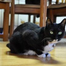 三匹の猫達。