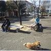 犬のしつけ 高崎・渋川 郵便局周辺で合同訓練の画像