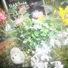 現場の今のお花達です(^^)/の画像