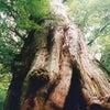 スピツアー「聖なる屋久島 原始の森と触れる旅」の画像