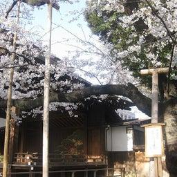 靖国神社 標本木