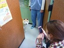 ひろ動物病院(埼玉県春日部市)