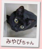 12_prof_みやび