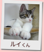 07_prof_ルイ