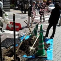 2013年の植樹が終…