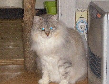 40匹猫のわいわい日記