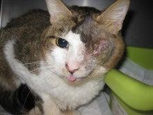 戸部ウータン動物病院のブログ