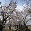 蛭が島の桜の画像
