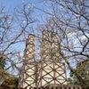 反射炉の桜の画像