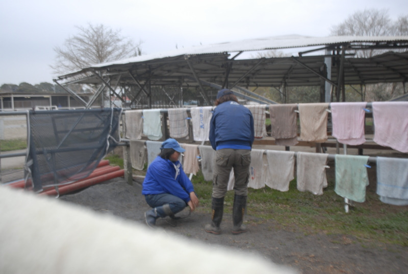 ◆秘)JRA厩務員になるには…|JRA競馬学校受験を目指せる馬の学校