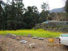 第2養蜂場開設
