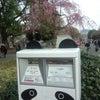 お花見@上野公園の画像