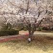 春が来た♪と近況