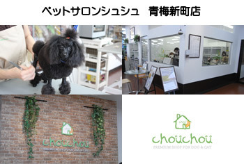 $ペットショップ ペットサロン トリミングの「chouchou」青梅新町店