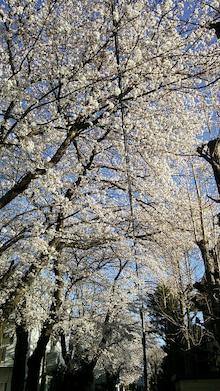 オカメインコのももちゃんと花教室と旅日記-DSC_0127.JPG