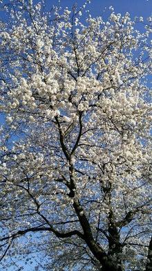 オカメインコのももちゃんと花教室と旅日記-DSC_0128.JPG
