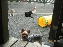 $札幌:犬マッサージとアロマ。身体元気・こころ満足の笑顔に出会える!