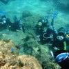 サンゴビーチで体験ダイビング&パラセーリングで沖縄満喫!青の洞窟&パラセーリングならテイクダイブの画像
