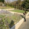 和歌山県 植物公園緑化センター (和歌山県岩出市東坂本)の画像
