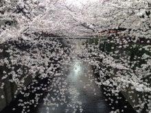 こうちゃんの営業日記-桜2