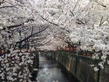 こうちゃんの営業日記-桜4