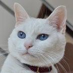 白猫あゆとキジトラ軍団