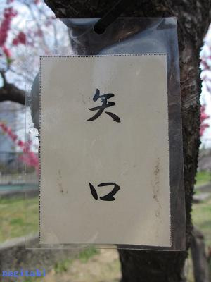 おねぎのブログ-2.「矢口」のネームプレート