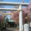 * 桜の時期にいつも気になっていた神社への画像