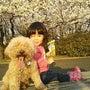桜を見に・・・♪