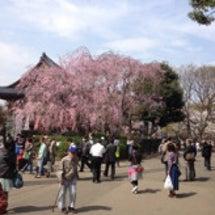 上野の桜 28日の状…