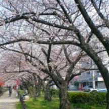 春ですね(°д°;)