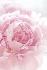 マダムアッシュ◆パリ~神戸~北摂~空と花を感じる日々。。。-407164_355137174506357_120954128_a.jpg