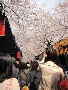DAISY*DIARY-平野神社3