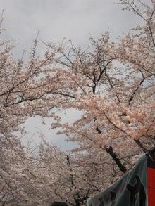 DAISY*DIARY-平野神社2