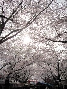 DAISY*DIARY-平野神社5