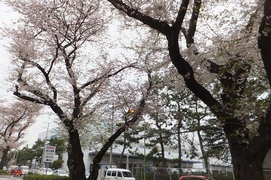 ビバモール座間・コストコ座間倉庫店 情報広場(ブログ版)