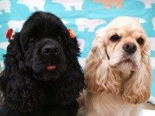 $犬のしつけ・訓練・美容 Ben&Pal~ベンパル~のブログ