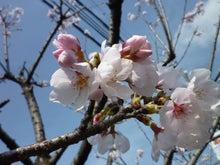 内山家具 スタッフブログ-20130401b