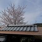 The Japanese gate  & Yoshino cherry treeの記事より
