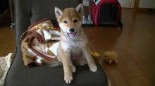 $(柴犬)ももちゃん!!のブログ-1