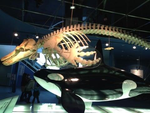 シャチが見られる水族館一覧と種類の ...